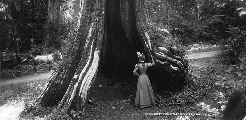 giant hollow tree